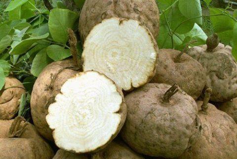 Medicinal mushroom, Plant, Vegetable, Food, Produce, Celeriac,