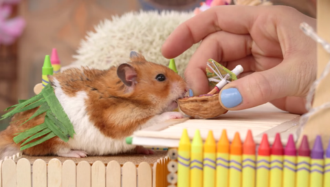 Human, Finger, Nail, Writing implement, Hamster, Rodent, Stationery, Snout, Whiskers, Pest,