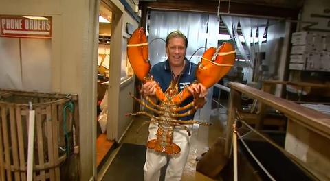 Arthropod, Decapoda, Muscle, Invertebrate, Lobster, Crustacean, Homarus, Seafood, Crayfish, Shellfish,