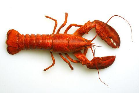 Arthropod, Organism, Invertebrate, Red, Amber, Orange, Ingredient, Crustacean, Decapoda, Coquelicot,