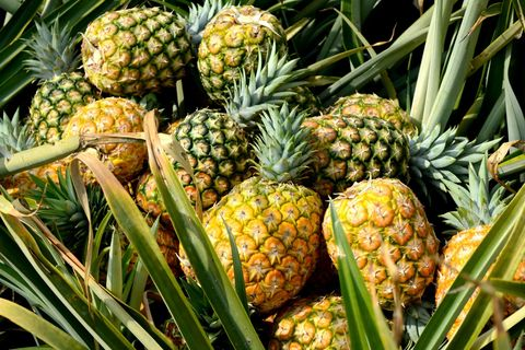 ed419c252f9 Here's Why Pineapples Always Hurts Your Tongue