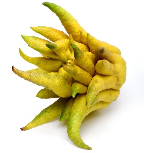 """<p>This weird-looking guy has no flesh or juice, but the rind and pith are sweet and versatile. Use it however you would use lemon peel or zest. </p><p><em>(Available at <a href=""""http://www.melissas.com/Buddhas-Hand-p/92.htm"""" target=""""_blank"""">Melissas.com</a>)</em></p>"""