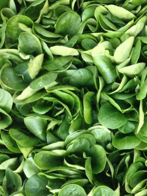 Green, Leaf, Pattern, Close-up, Produce,