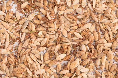 Rosemary-Parmesan Pumpkin Seeds