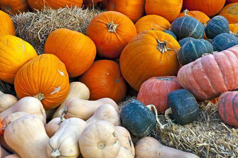 Squash, Vegan nutrition, Whole food, Local food, Calabaza, Orange, Vegetable, Natural foods, Produce, Pumpkin,