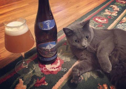 Drink, Drinkware, Barware, Bottle, Alcohol, Alcoholic beverage, Glass, Beer, Felidae, Beer glass,