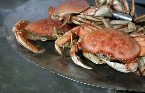 Dungeness crabs in California
