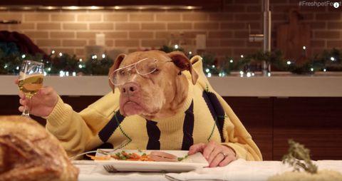 Carnivore, Tableware, Dishware, Glass, Drinkware, Plate, Barware, Snout, Dish, Dog,