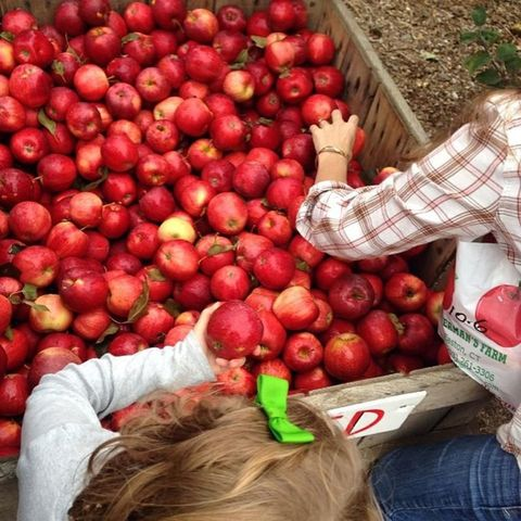 Silverman's Apple Farm