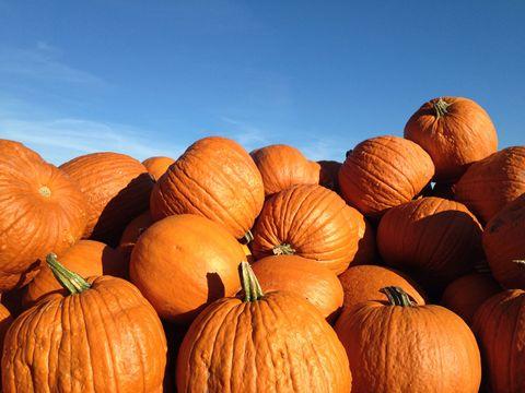 Squash, Vegetable, Natural foods, Orange, Local food, Vegan nutrition, Whole food, Produce, Calabaza, Pumpkin,