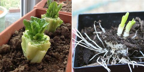 15 Vegetables You Didn't Know You Could Eat And Grow Again