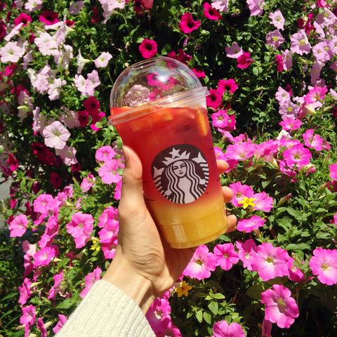 Petal, Flower, Drink, Pink, Shrub, Liquid, Magenta, Wrist, Flowering plant, Nail,