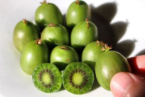Natural foods, Food, Fruit, Plant, Hardy kiwi, Produce, Kiwifruit, Luo han guo, Vegetable, Vegan nutrition,