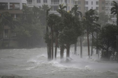Atmospheric phenomenon, Tropical cyclone, Water, Tree, Rain, Mist, Storm, Drizzle, Winter storm, Fog,