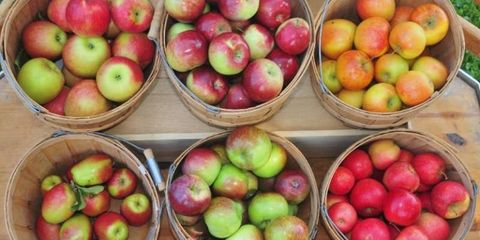 Best Places To Go Apple Picking Apple Picking Near Me
