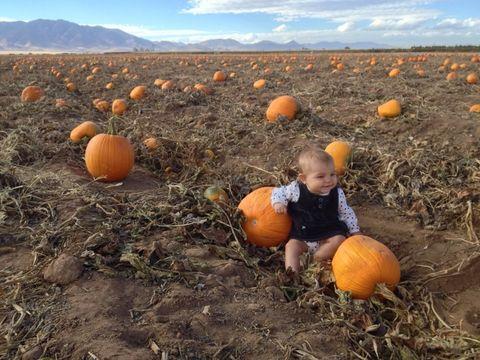 Pumpkin, Calabaza, Winter squash, Cucurbita, Squash, Plant, Gourd, Adaptation, Fruit, Cucumber, gourd, and melon family,