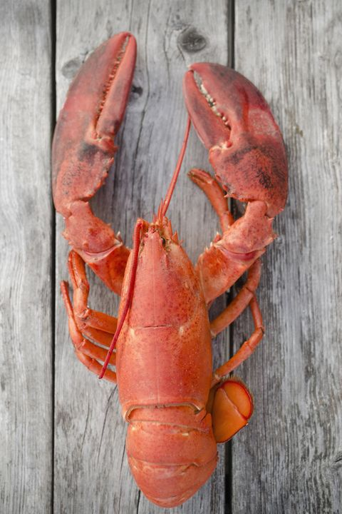 American lobster, Lobster, Homarus, Seafood, Decapoda, Crayfish, Food, Crustacean, Spiny lobster, Invertebrate,