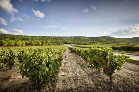 Nature, Sky, Agriculture, Vineyard, Field, Cloud, Crop, Wilderness, Plant, Photography,