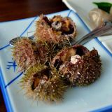 <p><b>Sea Urchin</b></p> <br /> <p>In Japan, South Korea, and other parts of Asia, sea urchin roe, also known as uni in Japanese, is considered a fine delicacy.</p>