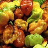 <p><strong>SHU:</strong> 100,000-350,000</p> <p><strong>Other Names:</strong> Boabs Bonnet, Scotty Bons, Bonney peppers, or Caribbean red peppers</p> <p><strong>Want To Eat It?</strong> Scotch bonnets are a common component of complex, delicious Jamaican sauces so check the menus of any restaurants near you. The fiery heat is paired with sweet, earth mango for a burn you can't help but love. Look for Jerk Chicken — it's frequently served with scotch bonnet sauce and mango chutney.</p>