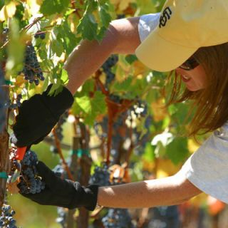 "<p><b>When:</b> September 23-25, 2013</p> <p>What:</b> Have you dreamed of retiring and moving to wine country? Until that day comes, Sonoma Grape Camp is your answer. This 3-day weekend takes oenophiles and wine enthusiasts behind the scenes for a hands-on experience where campers get to pick grapes, prune vines, enjoy tasting workshops, sort the harvest, prepare the juice for the aging process, and a whole lot more. By the time the weekend's over, campers will have a deep understanding as to how grapes go from vineyard to glass, and perhaps have the know-how to plan for their second career as a winemaker.</p>  <p><i><a href=""http://www.sonomagrapecamp.com/"" target=""_blank"">Sonoma Grape Camp</a>; Vintner's Inn, 4350 Barnes Road, Santa Rosa, CA; $2,000 per person; $3,700 per couple; includes hotel stay for three nights, all meals, tastings and transportation</i></p>"