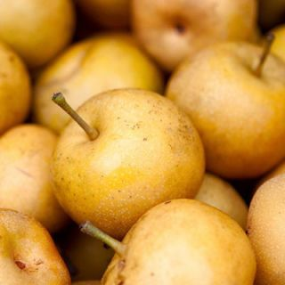 Asian pears are harvested in the months of July through November (and are therefore currently at their peak), but are available through cold-storage preservation until April.