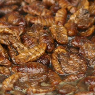 "<p>Also known as <i>beondegi</i> in Korea, boiled silkworm larvae or pupae are considered a  delicacy. The word <i>beondegi</i> literally translates to ""chrysalis"" or ""pupa"" in English, and the insects are usually eaten as a snack, often sold by street vendors or in bars. It's also possible to purchase the canned larvae in some grocery stores, but the treat is most often consumed out at drinking establishments or restaurants, or on the street. Though in some parts of the world this might seem like an unusual choice of snack, in many of Asia's great silk-producing countries, the larvae are eaten so as not to be wasted — the silkworms must be dropped in hot water as part of the silk production process. In other parts of Asia, like in China and Vietnam, you're more likely to come across them fried.</p>"
