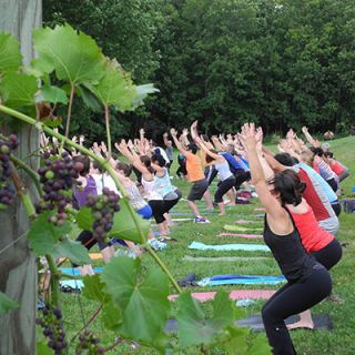 "<p>During the summer of 2013, fans of fashion brand Lululemon were treated to a scenic yoga class (and plenty of wine) at Shelburne. The vineyard is known for hosting regular yoga series that allow yogis to do their downward dog then savor a glass of wine. Coming up in 2014, Shelburne will offer a month-long series in collaboration with a local Vermont studio, Yoga Roots. In addition to sipping and stretching, students will be asked to reflect on the wine and their surroundings in journals. Indoor yoga classes are held in the loft area overlooking the vineyard's Tasting Room.</p><p><i><a href=""http://shelburnevineyard.com/"" target=""_blank"">Shelburne Vineyard</a>,6308 Shelburne Rd., Shelburne, VT</i></p>"