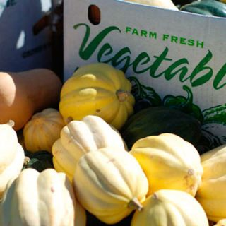 "<p>Arguably fall's favorite (and most prevalent) vegetable, winter squash can be seen on seasonal menus across the country. Whether simply roasted with butter and sage or tossed with ricotta as a ravioli filling, acorn squash (pictured) is versatile and simple to prepare, but has a limited peak from October to December.</p><p><b>Recipe Ideas:<br /><a href=""/recipefinder/acorn-squash-rutabaga-pecans-3695"" target=""_blank"">Acorn Squash Stuffed with Rutabaga and Pecans</a><br /><a href=""/recipefinder/maple-roasted-acorn-squash-4056"" target=""_blank"">Maple-Roasted Acorn Squash</a></b></p>"