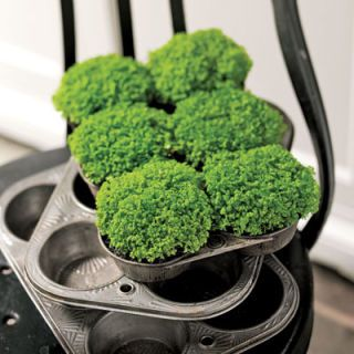 Good as homemade: Serve up clusters of baby's tears or moss in a vintage muffin tin to cheer a kitchen, dining table, or windowsill. Place plants directly from nursery flats (you can later transplant them to your garden). Mist as needed.