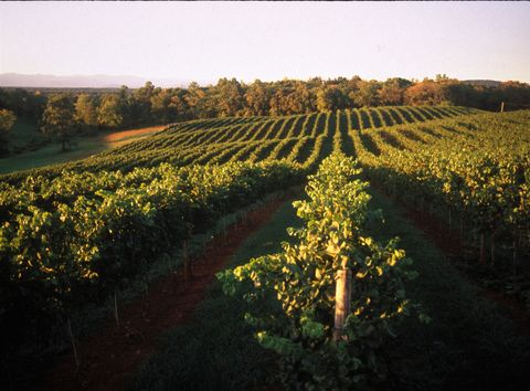 <p><b>State:</b> Virginia<br /> <b>Wine region origin:</b> 1770s<br /> <b>Specialty:</b> Chardonnay, Cabernet Franc, Cabernet Sauvignon, Merlot, Viognier</p><br />  <p>The growing season in Central Virginia, particularly the Monticello AVA, lasts 211 days. That's what inspired Thomas Jefferson to dream of growing grapes for wine there in the 1770s. His attempts were in vain as the Revolutionary War struck a couple years later, but the region was perfected in the 20th century and is recognized for its exceptional growing wine industry. The Monticello Wine Trail is home to a myriad of boutique wineries that bring patron, producer and product together in an intimate and beautiful setting.  VA wines tend to be lower in alcohol, higher in acidity and slightly more fruit-forward than alcohol from other regions.</p>