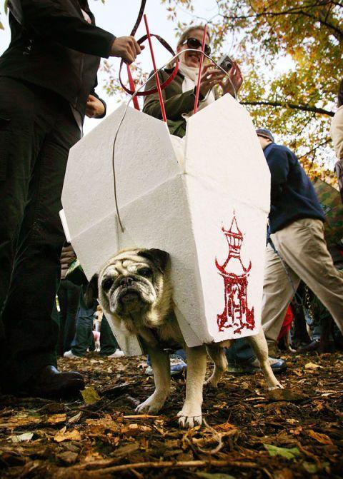 20 Cute Dog Halloween Costumes Food Inspired Costume