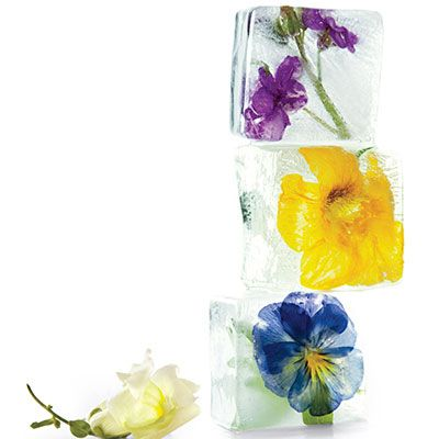 <p>Here's a cool new way to savor the beauty of flowers: Freeze them in ice cubes to brighten drinks.</p> </br> <p>To suspend flowers in the cubes, work in layers: Fill an ice tray (one that makes large cubes so the ice will last longer) a quarter of the way with water, add flowers facing down, and freeze. Add more water to fill halfway, and freeze. Fill to the top, and freeze again.</p> </br> <p>For ice that's especially clear, use distilled water that has been boiled and then cooled. This limits impurities and air bubbles, which make ice cloudy.</p> </br> <p>Use only edible flowers, such as orchids, nasturtiums, pansies, and snapdragons, that have been grown to be eaten (to ensure they haven't been treated with chemicals).</p>