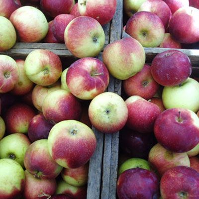 "<p>Like peaches, apples are typically grown with the use of poisons to kill a variety of pests, from fungi to insects. Scrubbing and peeling doesn't eliminate chemical residue completely, so it's best to buy organic when it comes to apples. Peeling a fruit or vegetable also strips away many of their beneficial nutrients.</p><br />  <p>Can't find organic? Safer alternatives include <a href=""/search/fast_search_recipes/?search_term=watermelon"" target=""_blank""><b>watermelon</b></a>, bananas, and tangerines.</p>"