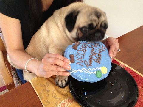 How To Make A Cake Safe For Dogs To Eat