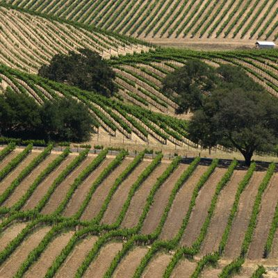 <p>It's easiest to divide California's winemaking regions into four groups:</p><br />  <p><b>North Coast:</b> Napa County, Sonoma County, Mendocino County, Lake County <em>(Best wines: Cabernet Sauvignon, Zinfandel, Sauvignon Blanc, Chardonnay, Merlot)</em><br /> <b>North Central Coast:</b> Monterey County, Santa Clara County, Livermore County <em>(Best wines: Syrah, Grenache, Viognier, Marsanne, Roussane)</em><br /> <b>South Central Coast:</b> San Luis Obispo County, Santa Barbara County <em>(Best wines: Sauvignon Blanc, Chardonnay, Pinot Noir, Syrah)</em><br /> <b>San Joaquin Valley</b> <em>(Known for jug wines)</em></p><br />  <p>Although you may be most familiar with the names Napa and Sonoma, less than 10 percent of all California wine comes from these two regions combined. Even so, Napa alone accounts for over 30 percent of dollar sales of California wines. In fact, the bulk of California wine is from the San Joaquin Valley, where mostly jug wines are produced. This region accounts for 58 percent of the wine grapes planted.</p>