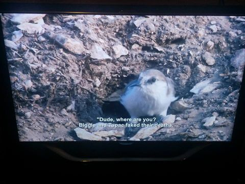 Netflix glitch subtitled this nature documentary with Aziz