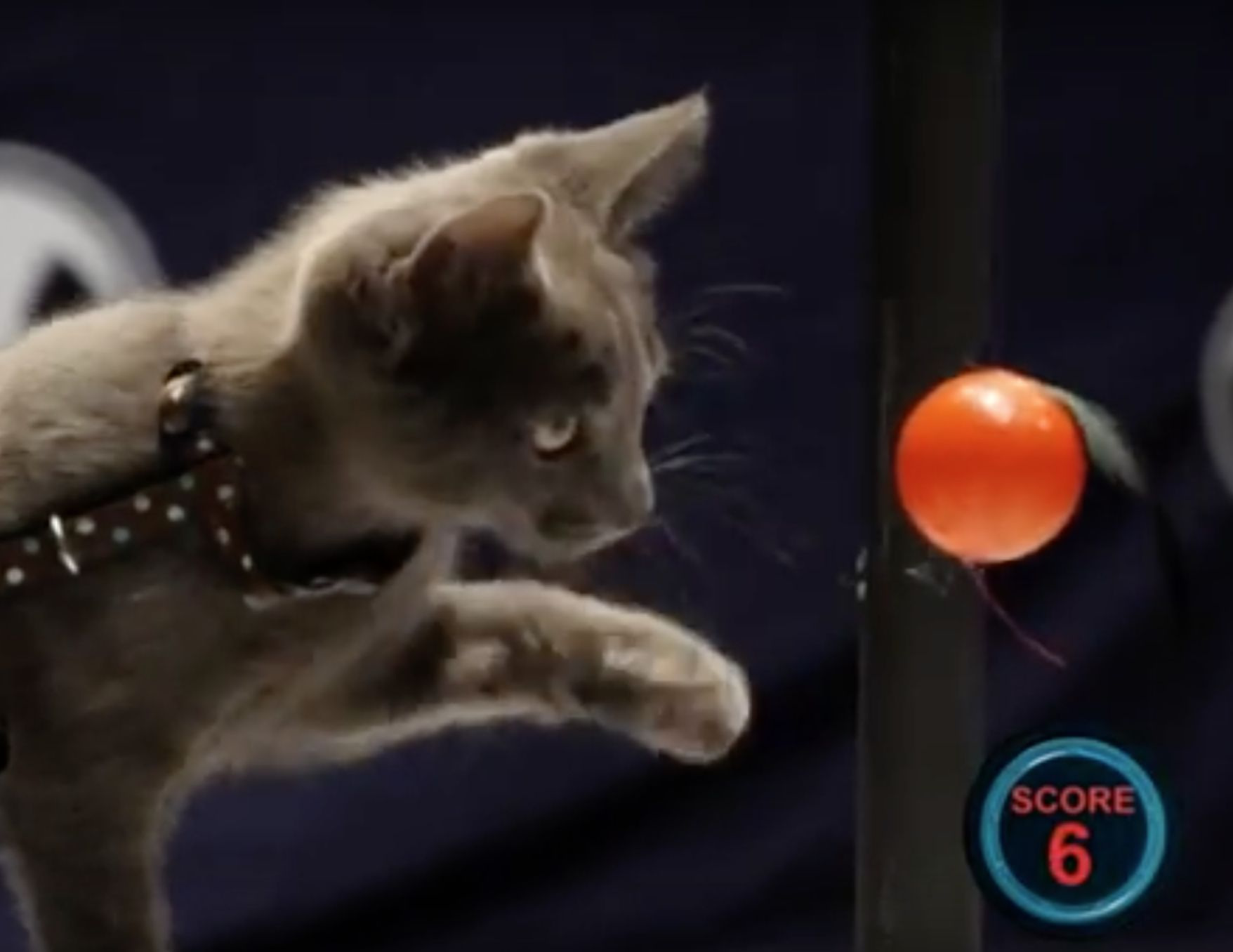 All4 S Battlecats Pits Kitties Against Each Other In An Amazing New Competition