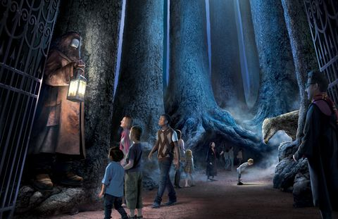 the forbidden forest, harry potter studio tour