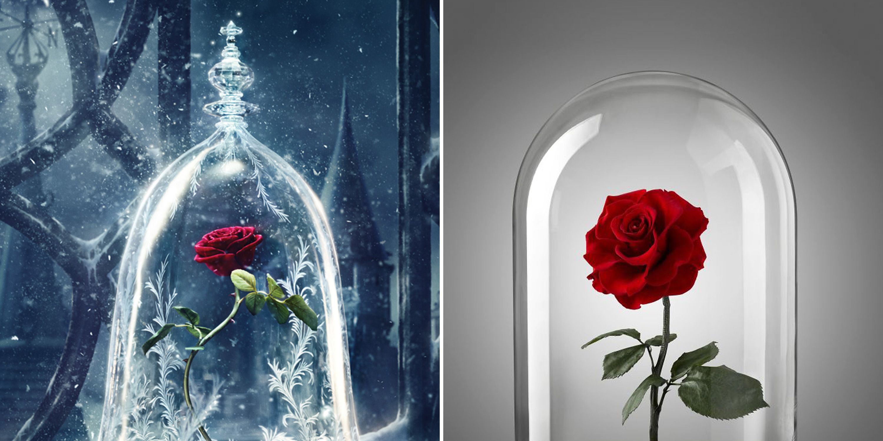 Beauty and the Beast inspired rose
