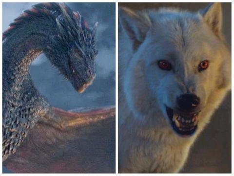 wolf of wall street torrentz2