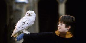 Harry Potter, Hedwig, owl