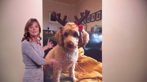 BBC weather report gatecrashed by a dog