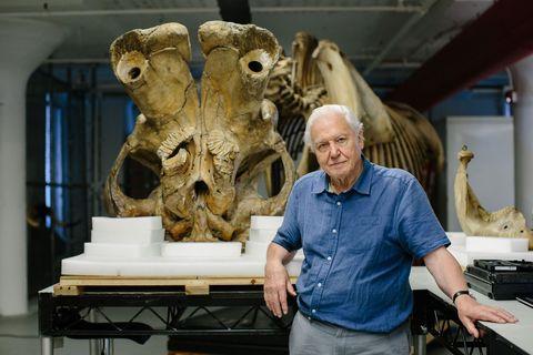 David Attenborough, and the Giant Elephant Jumbo