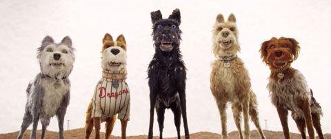 Isle of Dogs teaser still
