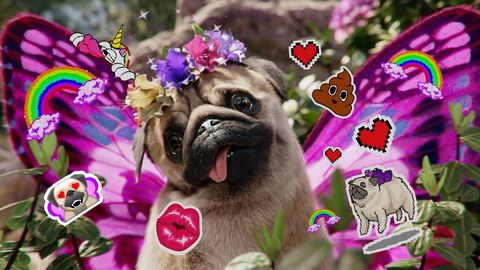 Snapchat launches first ever virtual pet, the Puggerfly