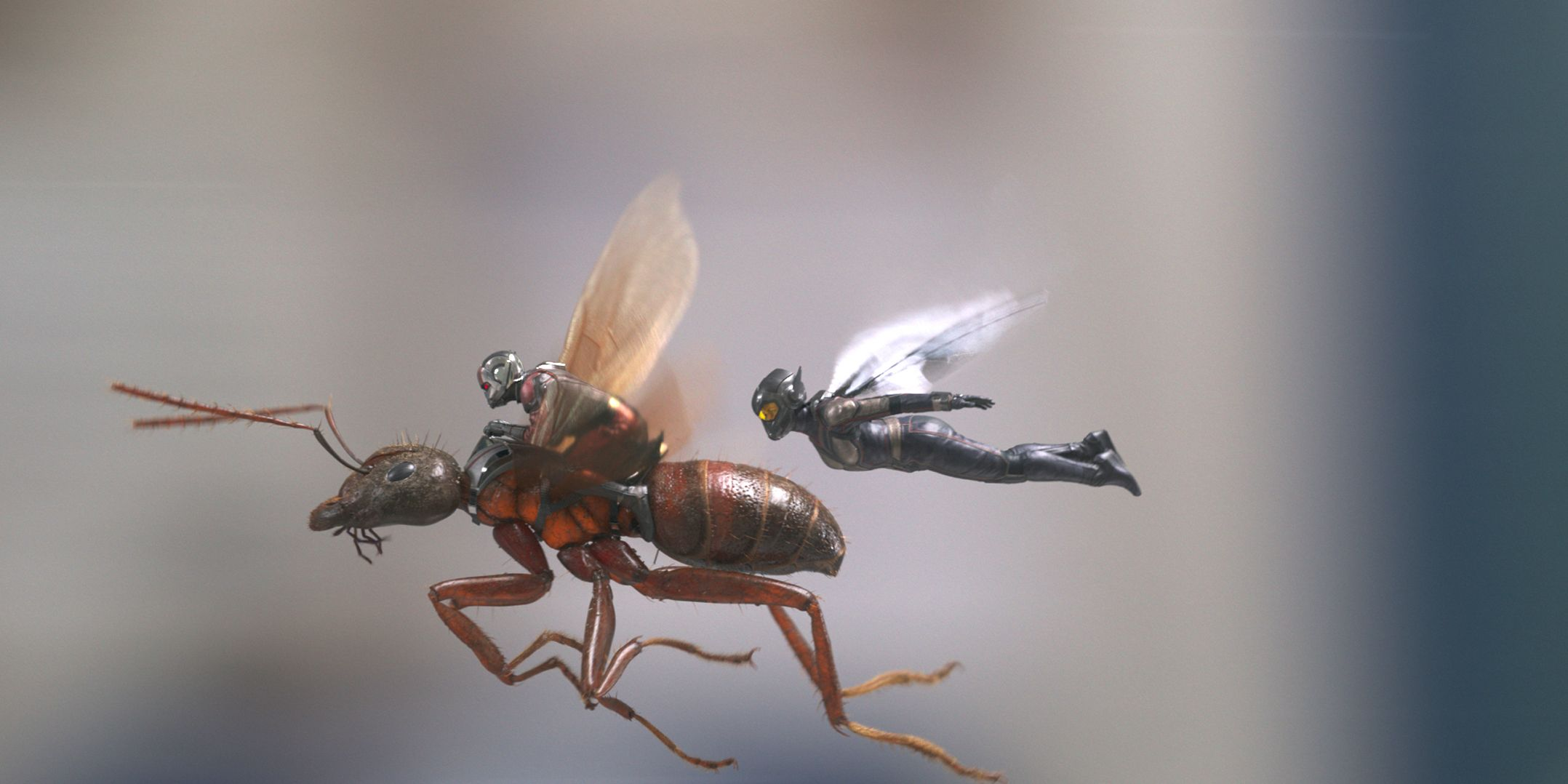 Ant-Man and The Wasp, Paul Rudd, Evangeline Lilly