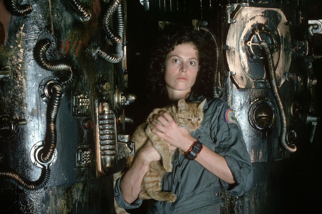 Jonesy the cat from Alien is getting his own spin-off story – yep, really