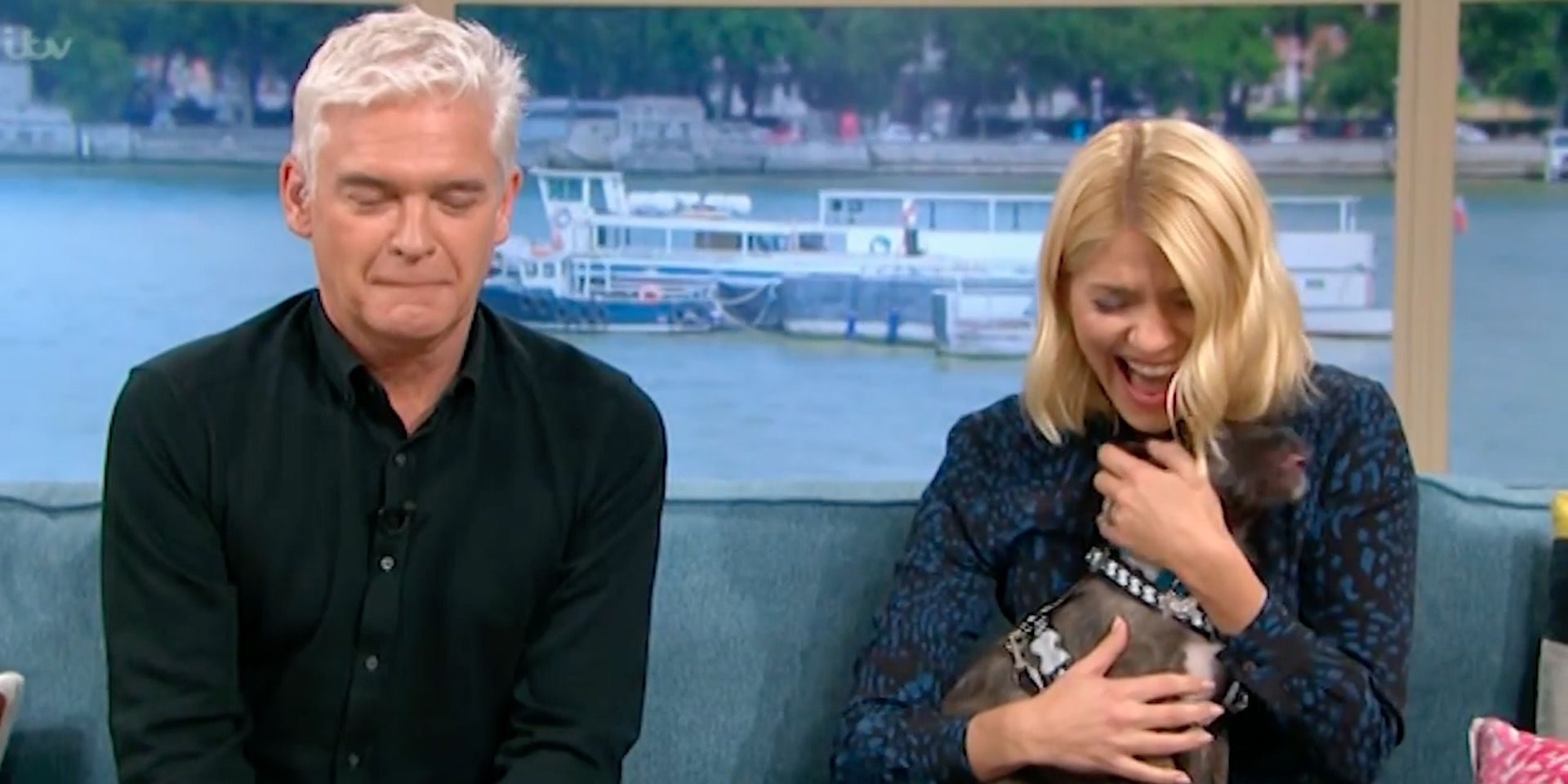Holly Willoughby, Phillip Schofield, dog, wee, This Morning