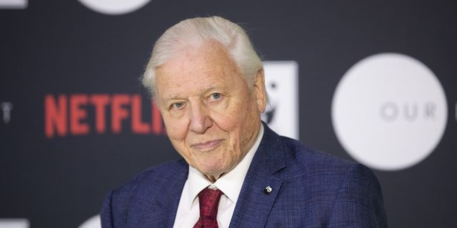 """BBC's new David Attenborough series Green Planet will tell """"emotional stories"""" about plants"""
